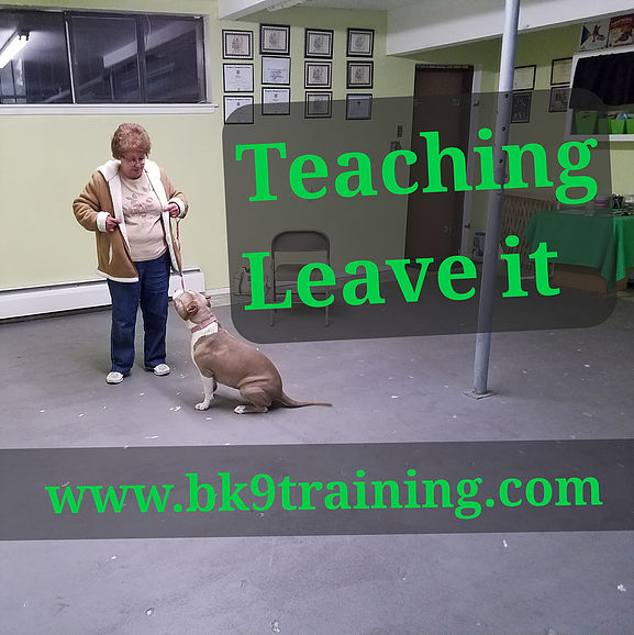 Bennett Canine Training