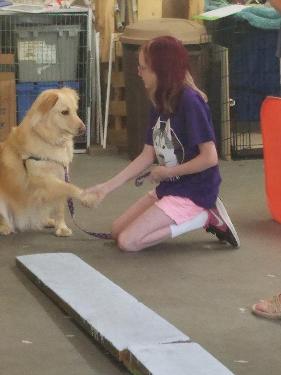 Trick dog training kids