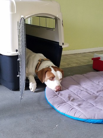 Kennel Training is relaxing and should never be stressfull