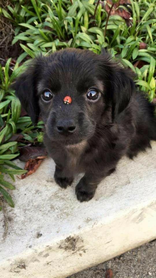 Bennett Canine Training