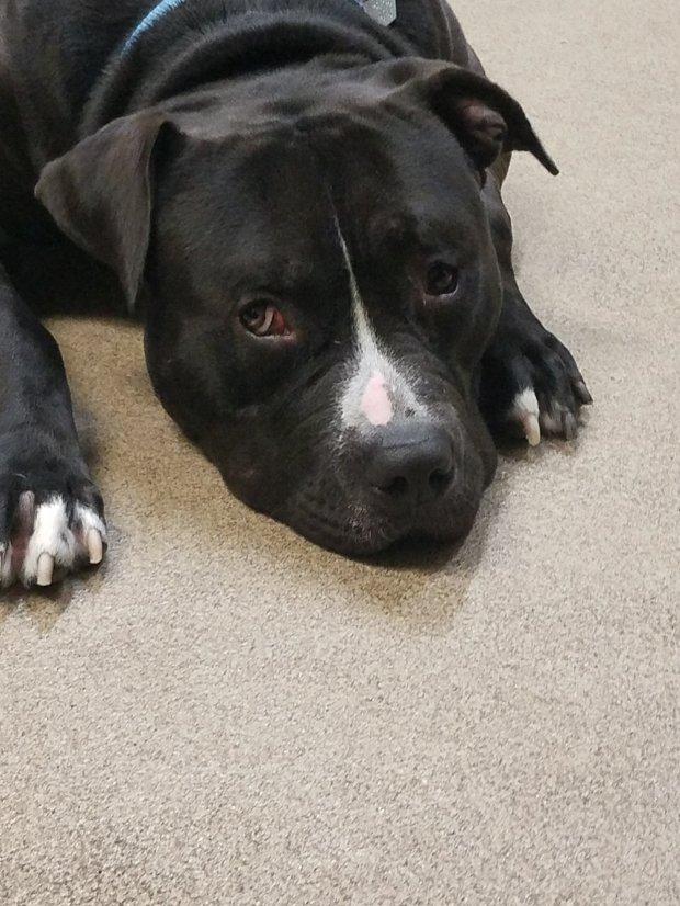 reward training shelter dogs