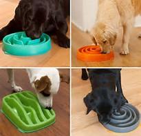 shelter dog adopted food