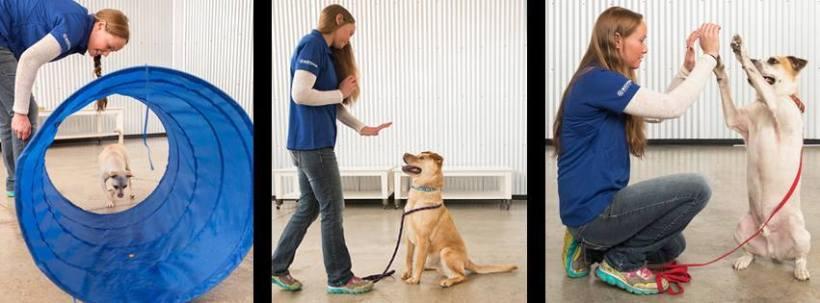 trick training