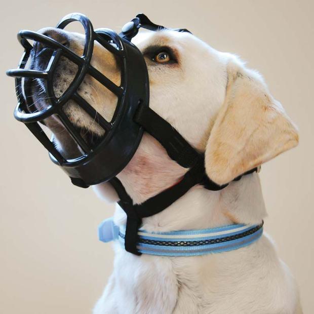 muzzle myths