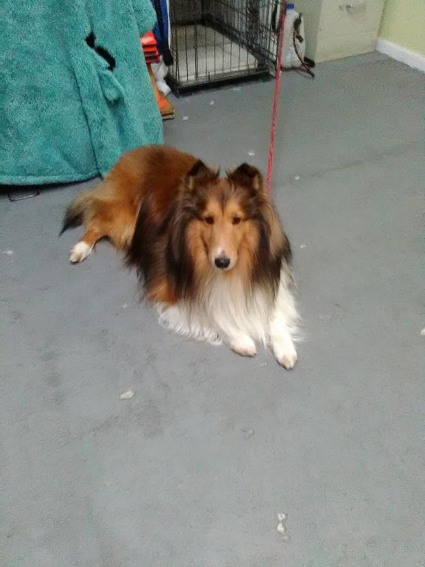 Dog training Englewood