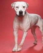 Prada- shetler dog adopted